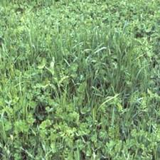 garden cover crop. Gardenway Cover Crop Mix Garden E