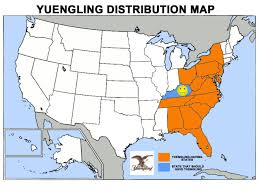 random stuff  mapsontheweb us yuengling beer distribution