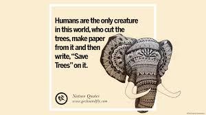 Elephant Quotes Hd Animal Quotes
