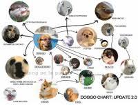 25 Best Doggo Chart Memes Corgo Memes Shoob Memes