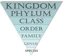 Triangle Classification Chart Kingdom Animalia Classifying Animals Mensa For Kids