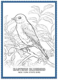 State Bird Coloring Pages By Usa State Birds Bird Coloring Pages