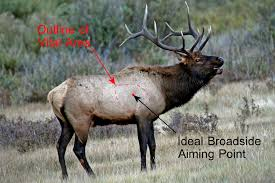 The Anatomy Of An Elk Proper Knowledge Of Shot Angles And