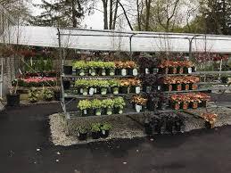 zainos garden center westbury newyork 5