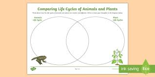 Venn Diagram Plants Comparing Plant And Animals Life Cycles Venn Diagram Worksheet