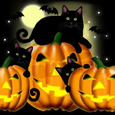 Image result for black cats and halloween