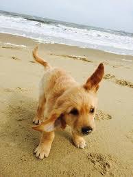 Lustige Hunde Bilder Mit Sprüchen Kostenlos Kostenlos Herunterladen