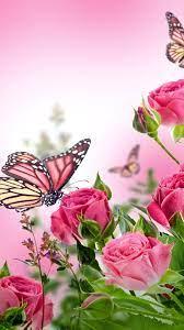 butterfly wallpaper mobile,butterfly ...