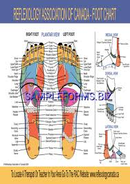 Foot Reflexology Chart Pdf Free 1 Pages