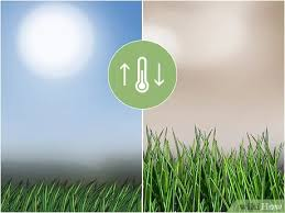 Elemento essencial para a jardinagem, o gramado tem de ser resistente, adequado ao clima e, sobretudo, viçoso. 4 Formas De Semear Grama Wikihow
