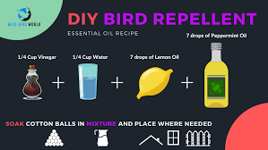 what smells repel birds wild bird world