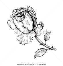Small Picture Contour Rose Vector Hand Drawn Illustration Stock Vector 337714661