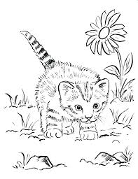 Baby Kittens Coloring Pages Cute Kitten Page Colouring Cute Kitten