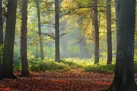 Zonlicht Door Bomen Xxl Fotobehang