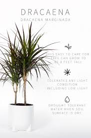 Extremely Low Light Plants Master List Of Low Light Indoor Plants Vintage Revivals