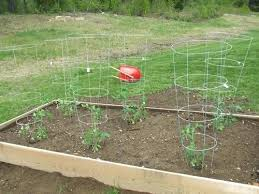 how to make a raised bed garden. Raised Beds Gardening Vegetables Bed Garden With Tomato Plants How To Make For . A