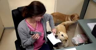 Dog Receipt At This Vet Clinic You Can Have A Dog Deliver Your Receipt