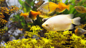 Image result for no two aquarium cleaning services are the same
