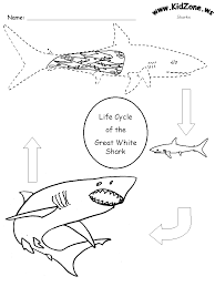 similiar shark life cycle diagram keywords tiger shark life cycle diagram