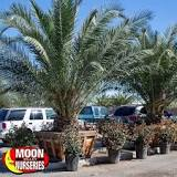 Image result for Do palm trees naturally grow in Florida?
