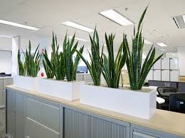 office planter boxes. sansevieria in small planter box office boxes