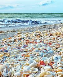 Sanibel Island Fl The Worlds Best Shelling Beaches