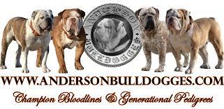 national bulldogge ociation nba exclusive olde english bulldogge registry