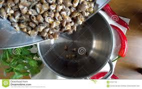 Caracoles De Mar Para Cocinar Metrajes   Vídeo De Preparación, Perejil:  90327182
