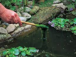 a hand holding a stick over a pond covered with think green stringy algae