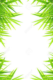 Green Bamboo Leafs Border Design Stock Photo Picture And Royalty