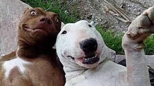 <b>Смешные собаки</b> Приколы про собак Funny Dogs 2019 ...