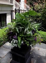 Best 25 Container Plants Ideas On Pinterest  Planters Shade Container Garden Shade Plants