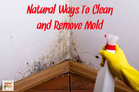 natural ways to clean mold and remove