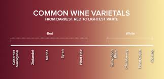 Getting Into Wine Red Vs White And Other Basics Winestyr