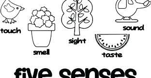 5 Senses Coloring Page Preschool 5 Senses Coloring Pages 5 Senses