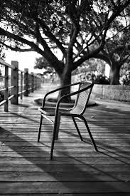 tree black and white wood white photography leaf chair seat spring shadow black furniture monochrome season