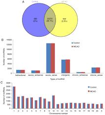 Bioinformatics Analysis Of A Long Noncoding Rna And Mrna Regulation