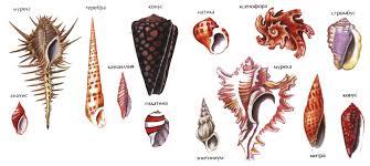 Брюхоногие моллюски характеристика и строение Зоология  Среда обитания