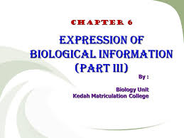 Dna Replication Definition Dna Genetic Information Dna Replication Protein Synthesis Gene