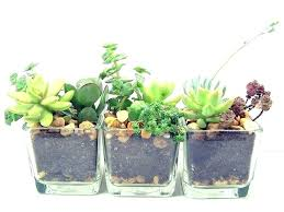 best indoor office plants. Braided Great Office Plants Good Small Money. » Best Indoor Office Plants A