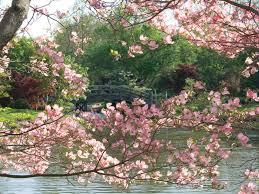 photo by missouri botanical garden