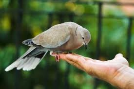 Mourning Dove Symbolism: Exploring Its Peace and Power | LoveToKnow