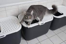 Where How To Set Up A Litter Box Arm Hammer Cat Litter