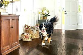cleaning dog urine from hardwood floors best floor for dogs the good flooring pet friendly in cleaning dog urine from hardwood floors
