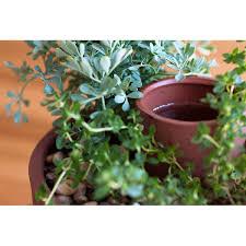 Self Watering Planter 2 thumbnail