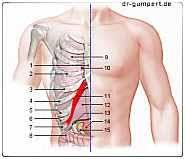 Druck im Oberbauch : Ursachen, Behandlung, Krankheiten