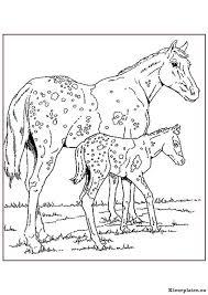 Paarden Kleurplaten Kleurplateneu