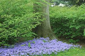 Small Picture Top 25 best Oak Woodland Garden Design Green Oak Woodland