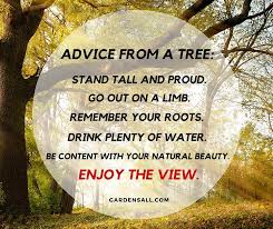 Quote Garden New Garden Memes Quotes And Sayings For Life Growth And Inspiration