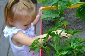 start your own back porch veggie garden